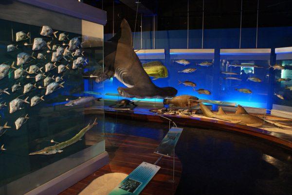 Museo de ciencias Naturales - Federico Carlos Lehmann - Cali